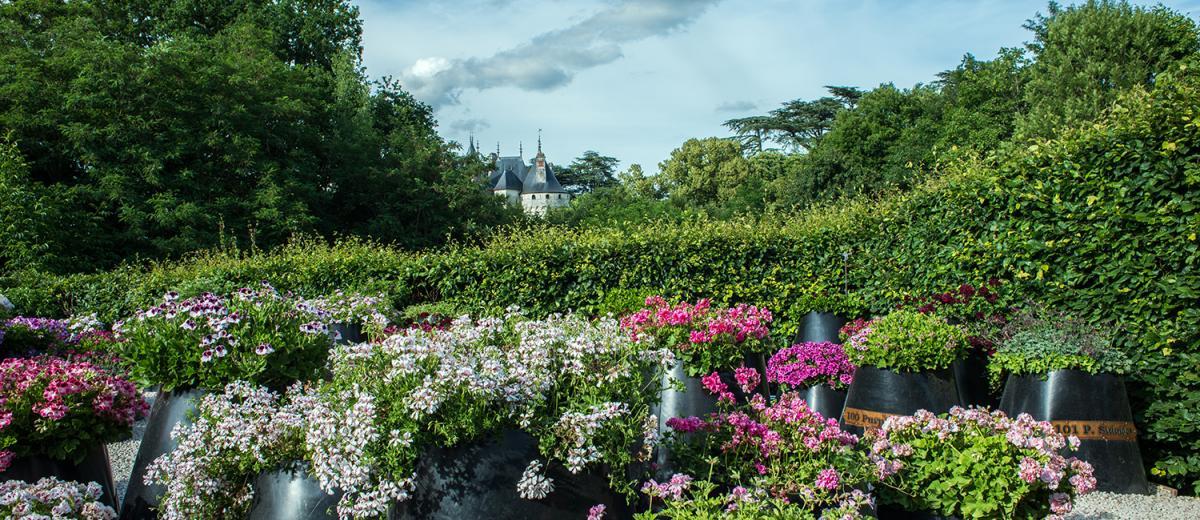 le jardin des 101 pelargoniums domaine de chaumont sur loire. Black Bedroom Furniture Sets. Home Design Ideas